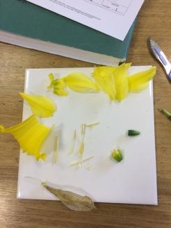 Daffodils4[1]